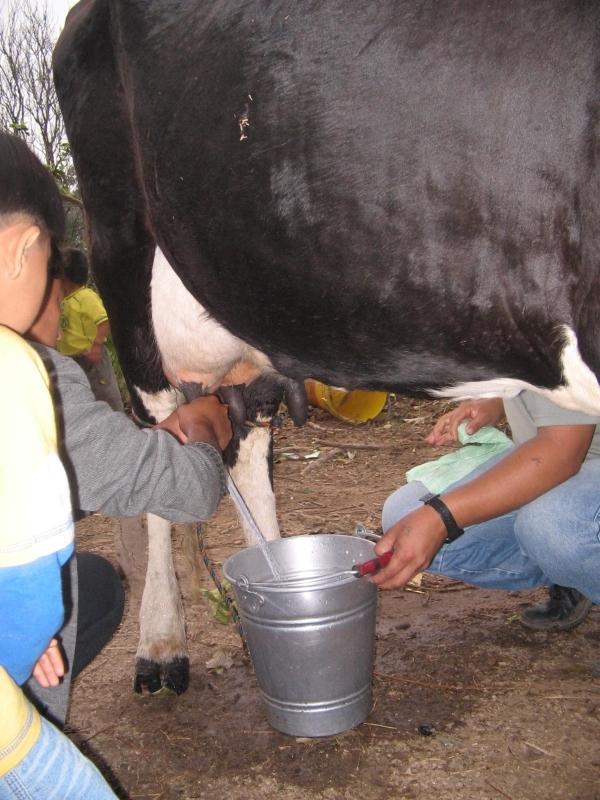 LLAMADA COLOR TAPA vaca1