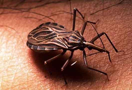 El mal de Chagas, es una enfermedad potencialmente mortal, es un serio y creciente problema de salud pública en Bolivia, especialmente para las poblaciones ubicadas en áreas endémicas, es decir, para los habitantes de los departamentos de Cochabamba, Chuquisaca, Santa Cruz y Tarija.