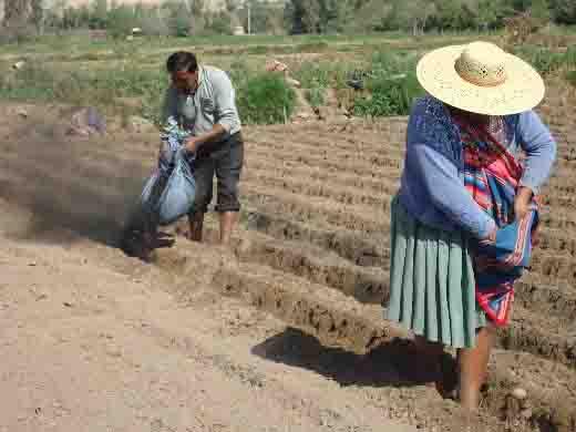 Aplicación biocarbono en la siembra