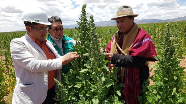 Felix Patzy, Gobernador de La Paz junto productores en una inspección a los cultivos.