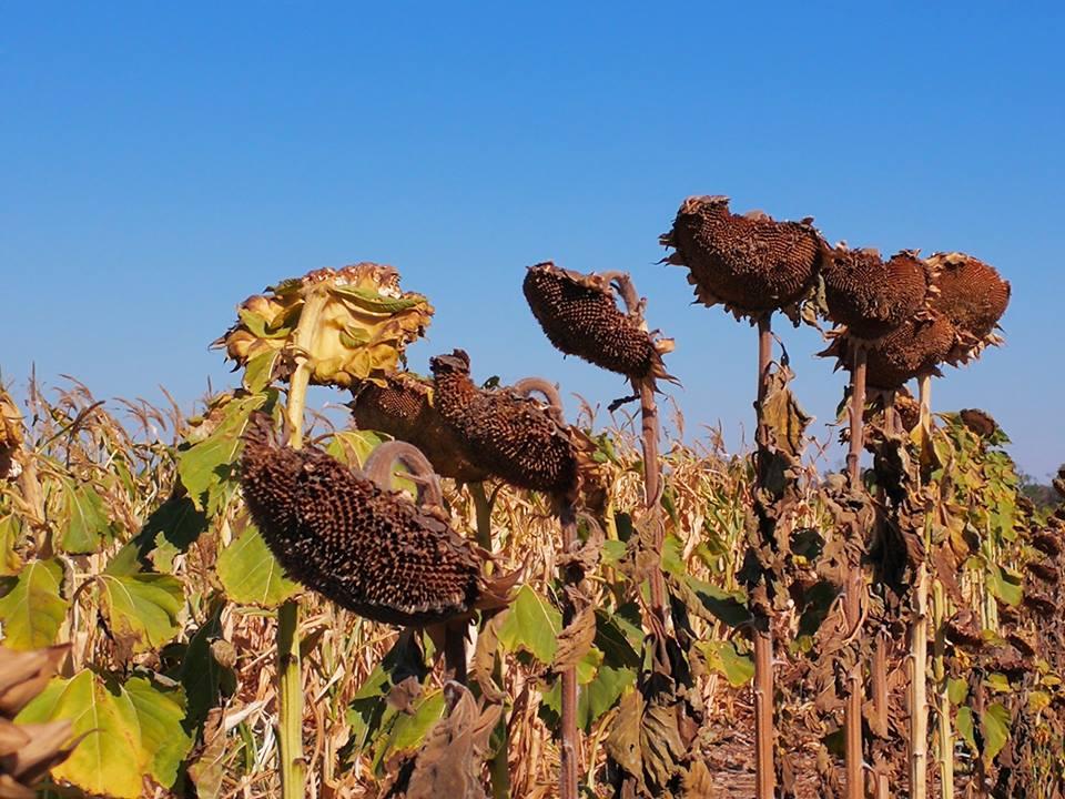 Se perdieron 532.610 mil toneladas de cereales y 110.440.300 millones de dólares el 2018.